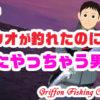 【淡路島遠征#2】タチウオが釣れたのにまたやっちゃう男!の巻【釣行記】