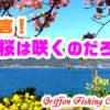 開花宣言!僕らの桜は咲くのだろうか?の巻【釣行記】
